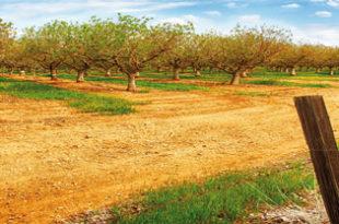 GEA Explotaciones Agrarias