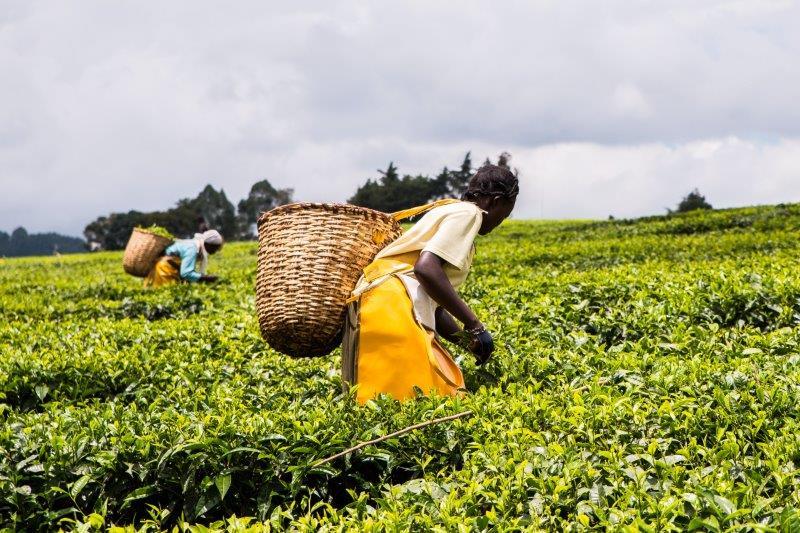 Mujeres en agricultura, El Día Internacional de la Mujer Rural aboga por el progreso hacia la igualdad