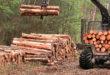 La gama de neumáticos forestales BKT contribuye al éxito de un sector sin crisis