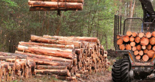 BKT Forestry
