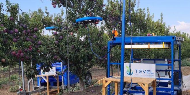 Kubota invierte en Tevel, líder en drones autónomos para la recolección de frutas