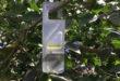 Bayer presentará Vynyty Citrus, para el control biológico de plagas en cítricos