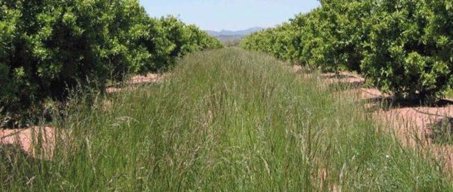 Reconvertir el Olivar Tradicional mediante Agrivoltaica